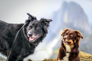 Earth Dogs